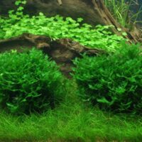 Υδρόβια Φυτά